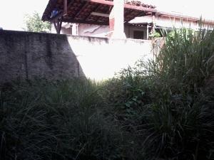 Quintal na parte de trás da casa tomado por mato